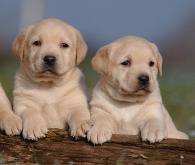 site de rencontres chiens Mulhouse